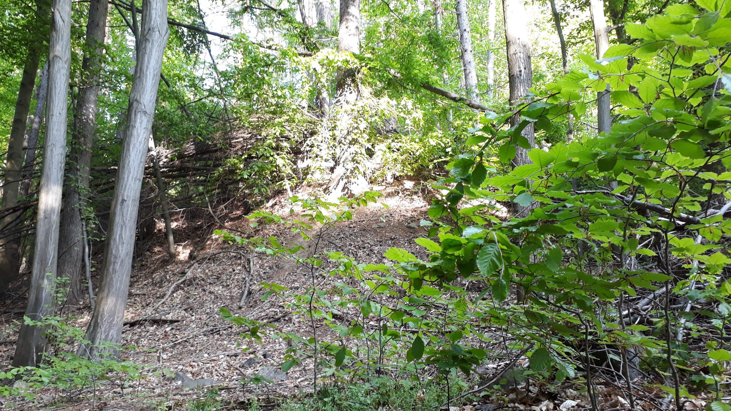 Erste Schnuppertour Waldbaden findet am 23. Mai statt