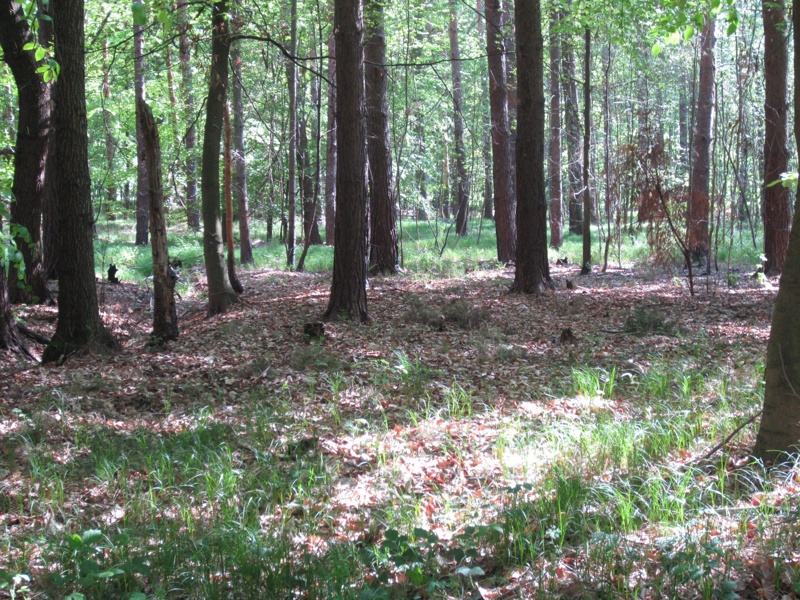 Herzliche Einladung zur Waldbaden-Tour am 24. Mai